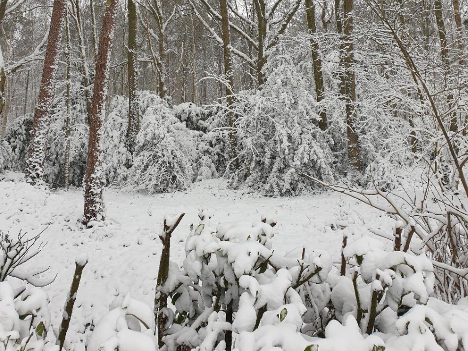 bos-sneeuw